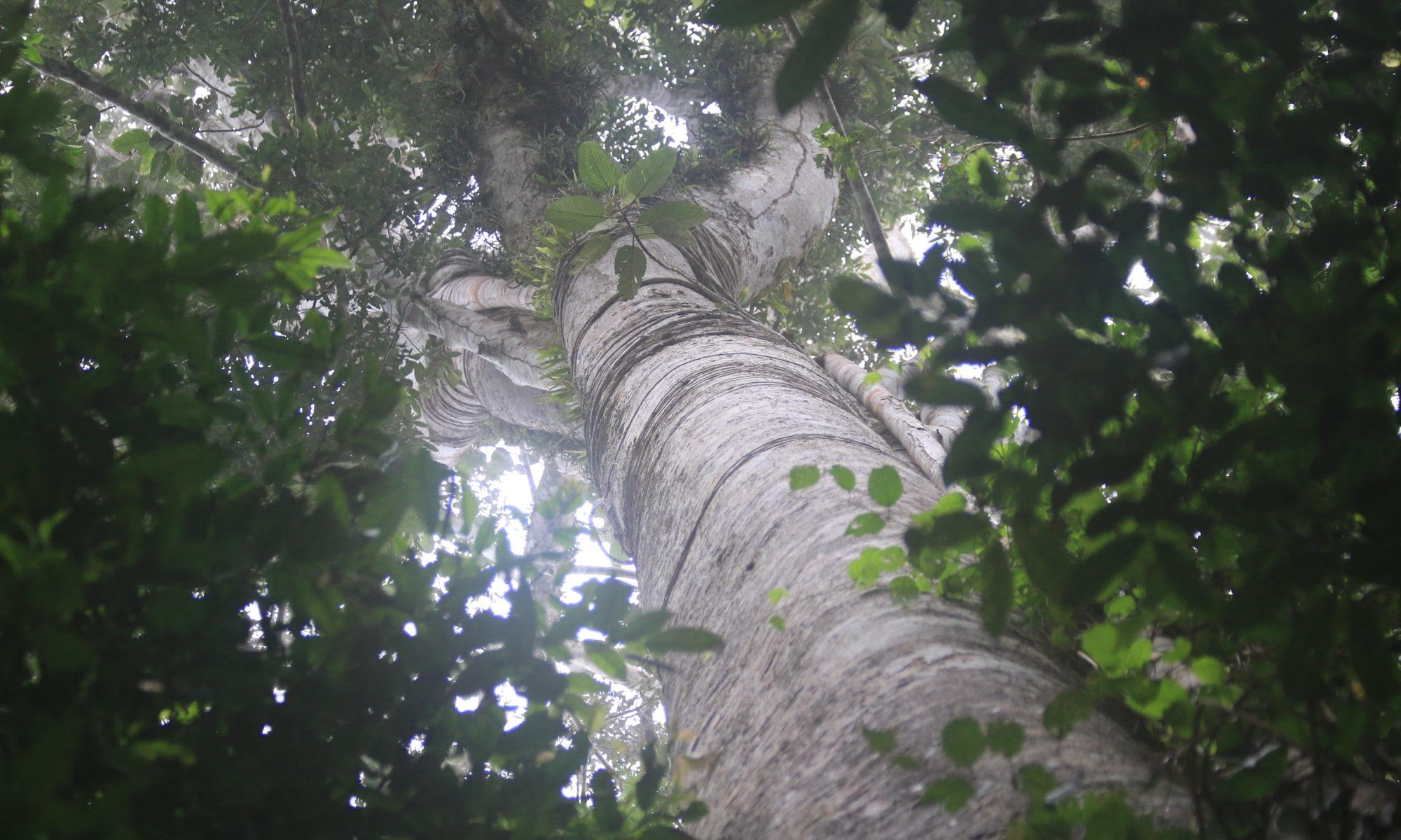 Concession de conservation Yanayacu-Maquia en Amazonie